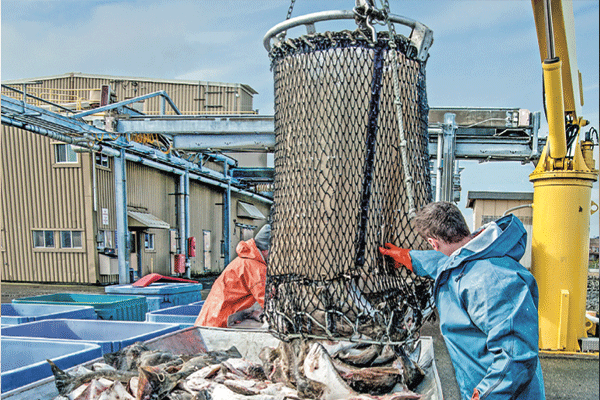 Pandemic hit seafood industry hard